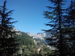 देवदार, वन, तोस के विशाल काय वृक्ष के मध्य पर्यटन स्थल, शिमला