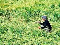 फसल कटाई के बाद रखरखाव में सुधार और कृषि उपजों के प्रसंस्करण को मिलनी चाहिए प्राथमिकता