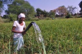 खरीफ फसलों का रकबा 685 लाख हेक्टेयर के पार