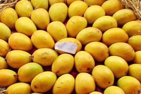 -mango