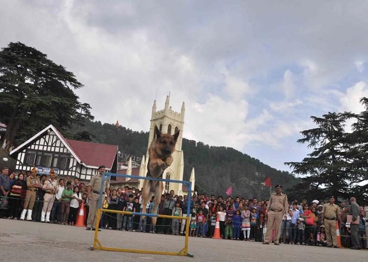 पुलिस विभाग के सी.आई.डी. खंड द्वारा डॉग शो का रिज मैदान पर किया गया प्रर्दशन