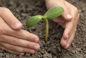 स्वतंत्रता दिवस को छात्रों और प्रकृति को एक-दूसरे के नजदीक लाने की योजनाओं के साथ मनाएं