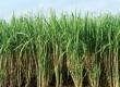 खुशखबरी: गन्ना किसानों को 8 हजार करोड़ के राहत पैकेज को मंजूरी