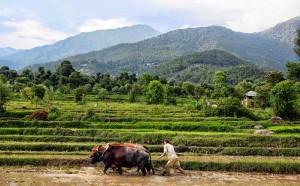कृषि मंत्रालय के आंकड़ों के मुताबिक 2012-13 में कृषि विकास दर 1.2 प्रतिशत