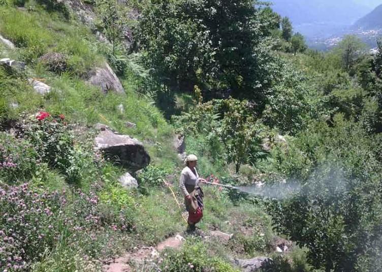 ट्री स्प्रे आयल की स्प्रे क्यों और कब करें बागवान : डा. एस.पी. भारद्वाज