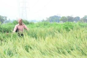 किसानों को 500 रुपये के पुराने नोटों से बीज खरीदने की अनुमति