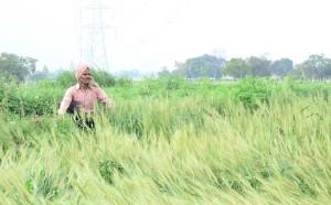 किसानों की आत्महत्या की वजह प्राकृतिक भी है और कृत्रिम भी