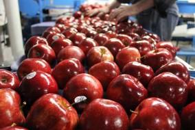 हिमाचल से विभिन्न मण्डियों को भेजी गई 1 करोड़ 15 लाख 47 हजार 151 सेब पेटियां