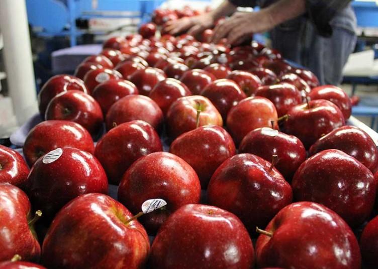 इस साल सेब का उत्पादन पिछले वर्षों के मुकाबले कम