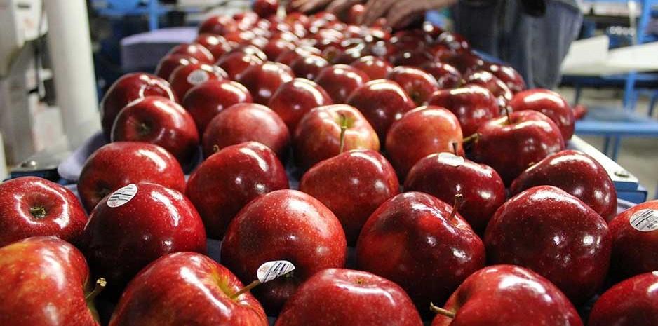 मण्डियोें में पहुंची 8.70 लाख से अधिक सेब की पेटियां