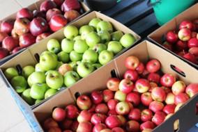 सेब बक्सों के परिवहन के लिए भाड़ा दरें तय
