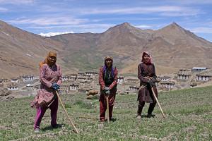 खेती करतीं किब्बर की महिलाए