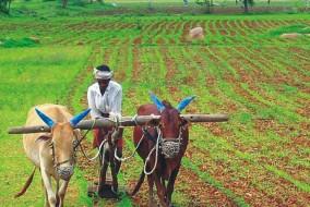 मुख्यमंत्री खेत संरक्षण योजना में बदलाव....