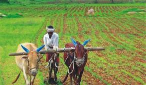 कृषि निदेशक का किसानों से आहवान: अपनी फसलों का करवायें बीमा