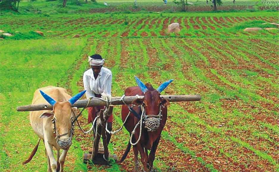 चालू रबी मौसम में 7.72 लाख टन खाद्यान्न उत्पादन का लक्ष्य : कृषि निदेशक डॉ. देस राज
