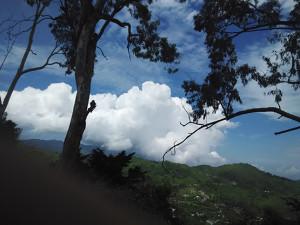 वृक्ष प्रकृति की अनमोल धरोहर व पर्यावरण के संरक्षक, छायाकार: मीना कौंडल