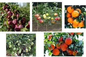 फलों, सब्जियों, मशरूम व मधुमक्खी पालन