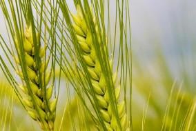 योजनाओं का लाभ तभी मिल सकता है अगर किसान-बागवान जागरूक हों अपने अधिकारों के प्रति