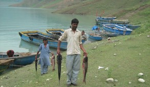 पौंग जलाशय से मिला 2800 मछुआरों को रोजगार, वर्ष 2019-20 में 266 रूपये प्रति किलोग्राम की दर से हुई मछली की बिक्री