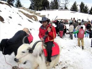 शिमला की हसीन वादियाँ वर्षपर्यंत पर्यटकों का स्वागत करती हैं।