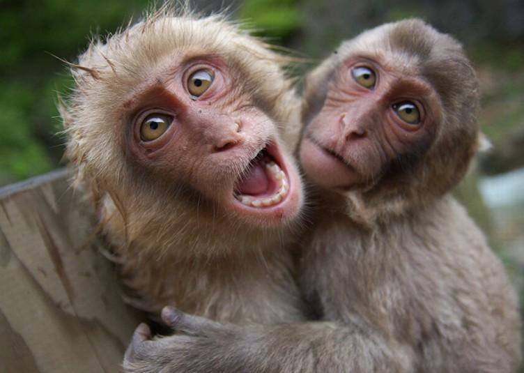 मण्डी की 10 तहसीलों में बंदरों को किया गया वर्मिन घोषित, जानकारी दे रहे हैं डीएफओ मंडी(देखें वीडियो)