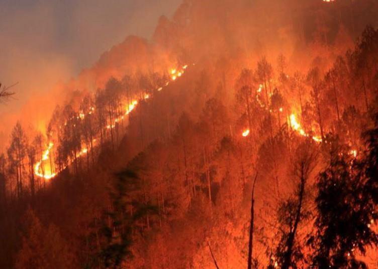 उत्तराखंड में आग की स्थिति काबू में, अभियान जारी: राजनाथ सिंह