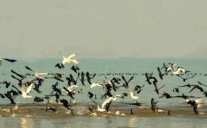 पौंग झील
