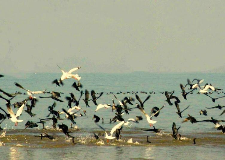 पौंग बांध जलाशय वन्यजीव अभयारण्य में आठ दिनों से पक्षियों की मौत का कोई मामला नहींः वन मंत्री