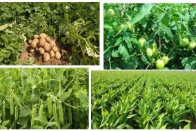 कृषि विभाग का चालू खरीफ में 9.17 लाख टन खाद्यान्न उत्पादन का लक्ष्य
