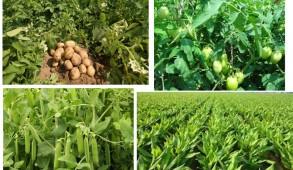 प्रदेश सरकार बेहतरीन योजनाओं द्वारा कृषि उत्पादन में बढ़ौतरी व किसानों की आय में वृद्धि के लिए निरंतर प्रयासरत