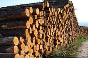 भारत सरकार के साथ ईमारती लकड़ी की आपूर्ति के लिए समझौता ज्ञापन पर होंगे हस्ताक्षर