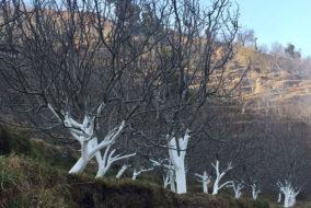 वन विभाग ने की अवैध कब्जों को हटाने की मुहिम तेज, 74 बीघा भूमि से हटाए अवैध कब्जे