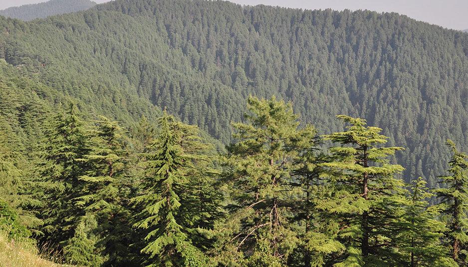 राज्य के लिये 1300 करोड़ की 'हिमाचल प्रदेश वन समृद्धि परियोजना' स्वीकृत