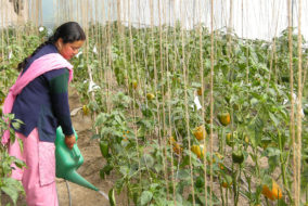 मशोबरा़ मेंकरीब 450 महिलाएं किचन गार्डनिंग करके बन सकेंगी स्वाबलंबी
