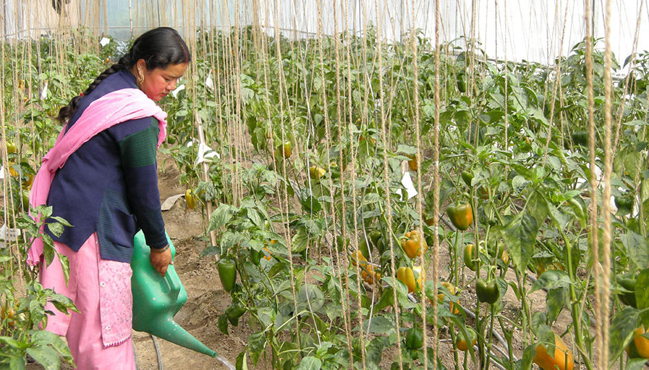 कृषि सचिव ने प्राकृतिक खेती कर रहे प्रगतिशील किसानों के फार्मो का किया निरीक्षण
