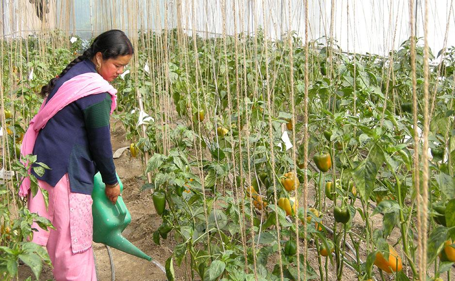 राज्य में किसानों को सिंचाई सुविधा के लिए पीएम कुसुम योजना शुरू : कृषि निदेशक