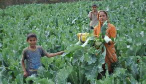 बेमौसमी सब्जी उत्पादन से ग्रामीण आर्थिकी का कायाकल्प