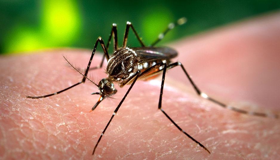 प्रदेश में डेंगू' के 401 मामले पॉजीटिव, स्वास्थ्य विभाग ने जारी की एडवाईजरी