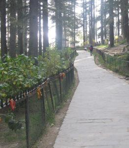 देवदार के जंगल में बसा हिडिम्बा मंदिर