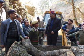 प्रदेश सरकार की पहल : अन-इक्नोमिकल गिरे पड़े व सूखे पेड़ों के लिए नई नीति
