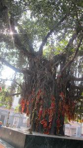 मंदिर में मकर संक्रांति मनाने की अनोखी परम्परा