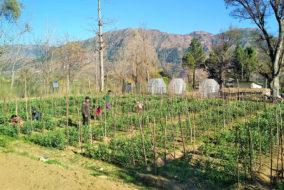 नौणी विश्वविद्यालय में शून्य लागत प्राकृतिक खेती के उत्साहजनक परिणाम