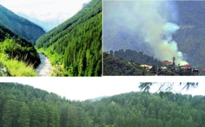 हरे-भरे वनों की शुद्ध हवा व शुद्ध वातावरण सबको खींच लाता है हिमाचल