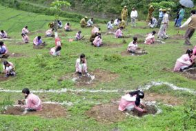 हरित आवरण वृद्धि के लिए हिमाचल सरकार के नवीन प्रयास