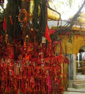 जो श्रद्धालु इच्छापूर्ति के उद्देश्य से वटवृक्ष को लाल मौली बांधता है उसकी इच्छा पूर्ण होती है