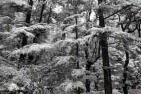 हिमाचल: 3 मार्च तक बारिश-बर्फबारी...