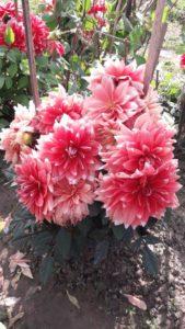 सर्द ऋतु में उगने वाले फूल