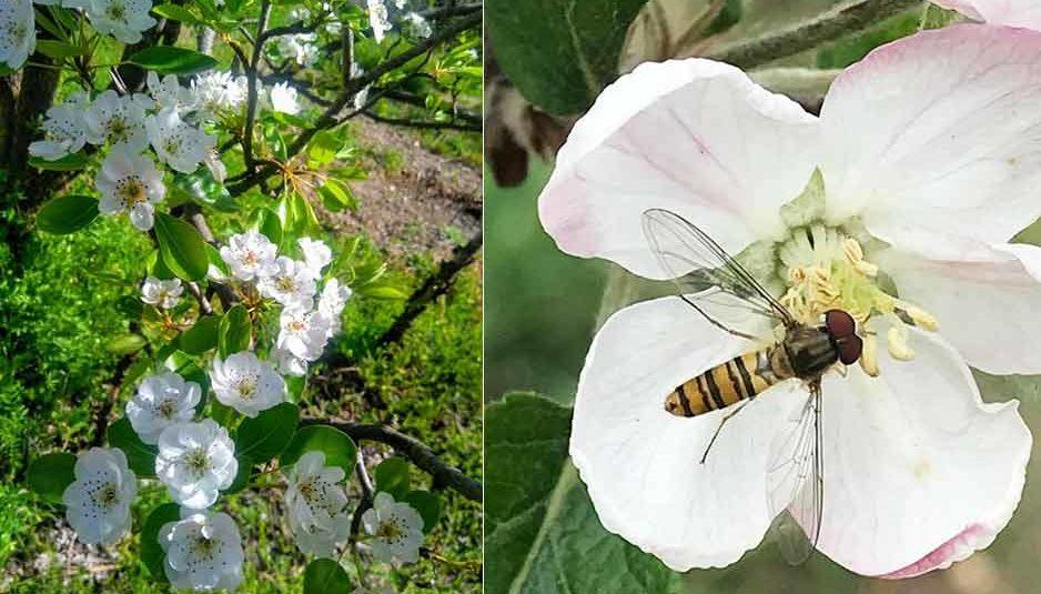 बागीचों में फूल जितना आकर्षक व लम्बी अवधि तक खिला रहेगा, फल बनने की संभावना होगी अधिक: डॉ. भारद्वाज