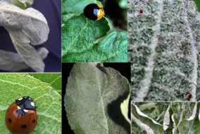 मौसम का बदलता मिज़ाज सेब बागीचों में कीट-माईट व रोग बढ़ाने में सहायक : बागवानी विशेषज्ञ डॉ. एस.पी. भारद्वाज
