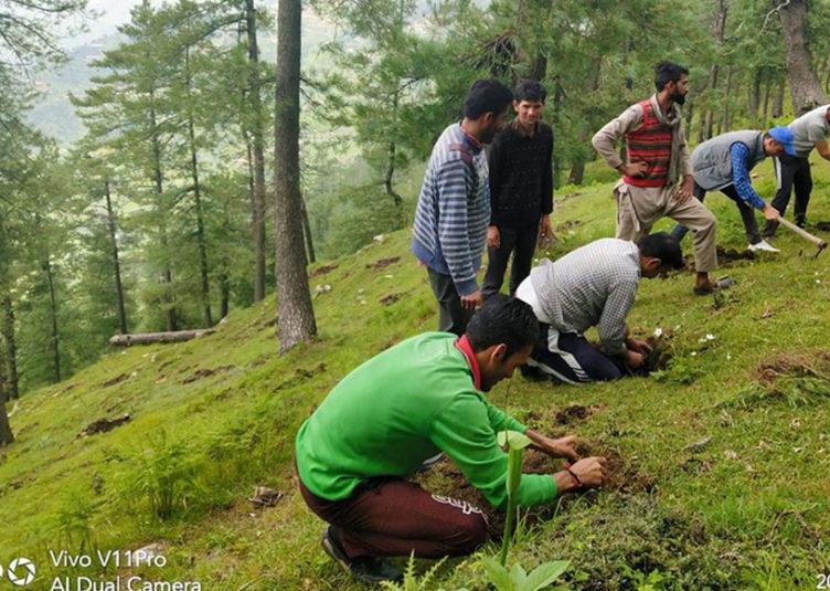 """प्रदेश में चलेगा 9 से 16 अगस्त """"मुख्यमंत्री हरित विद्यालय अभियान"""" : शिक्षा मंत्री"""